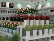致富汇:开个花店需要具备哪些条件