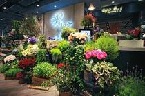 致富汇:开花店需要多少钱?花店成本分析