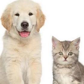 爱侣动物医院加盟