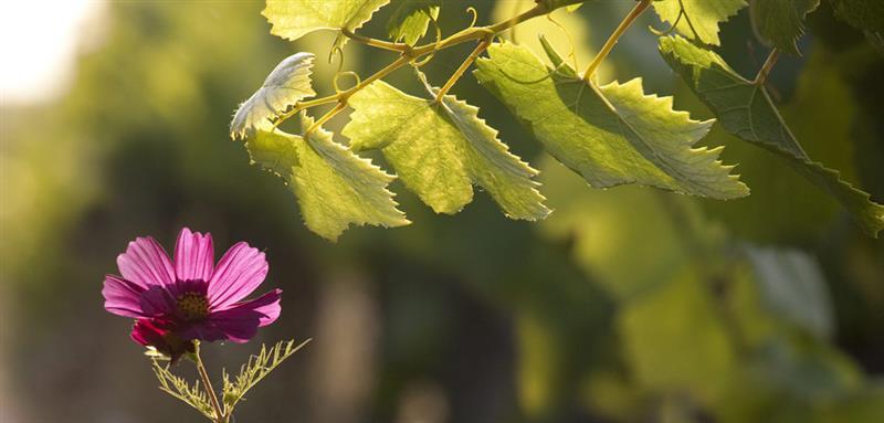 皇家花园红葡萄酒加盟
